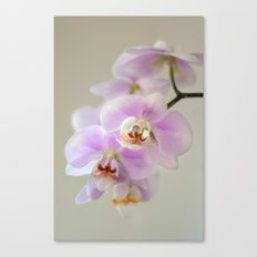 orchid close up Canvas Print