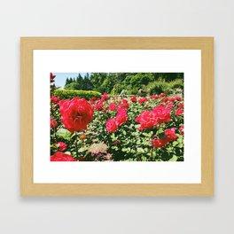Red Biltmore Roses Framed Art Print