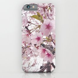 Cherry Blossom Tree in High Park iPhone Case