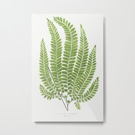 Adiantum Pubescens from Ferns British and Exotic (1856-1860) by Edward Joseph Lowe Metal Print