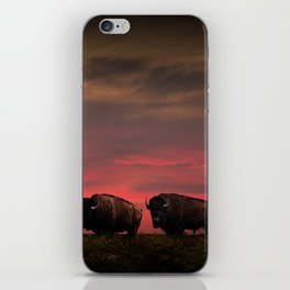 Two American Buffalo Bison at Sunset iPhone Skin