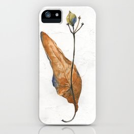 Linden seeds in winter (watercolor on textured background) iPhone Case