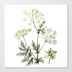 watercolor dill Canvas Print