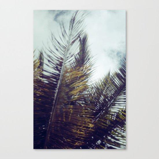 Palm Sky II Canvas Print