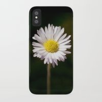 daisy iPhone & iPod Cases featuring Daisy by Lori Anne Photography