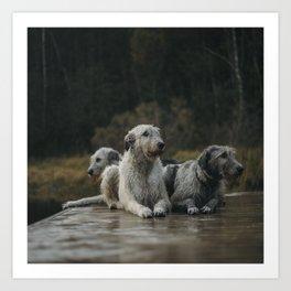 Irish Wolfhounds. Art Print