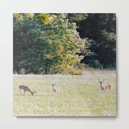 Whitetail Bucks Metal Print