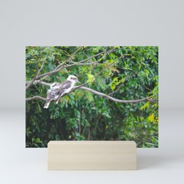 Kookaburras Mini Art Print
