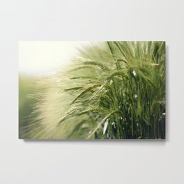 Cereal Harvest Metal Print