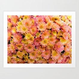 Pink Yellow and Orange Chrysanthemums Art Print