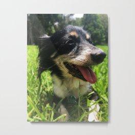 Smiley Pup Metal Print