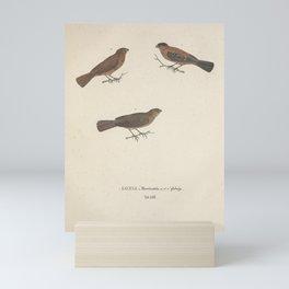Vintage Illustration - Avium Novae (1825) - Copper Seedeater & Yellow-bellied Seedeater Mini Art Print