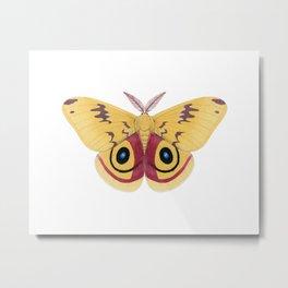 io moth (Automeris io) male specimen 1 Metal Print