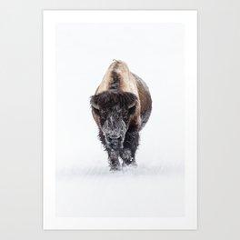 Yellowstone National Park: Lone Bull Bison Art Print