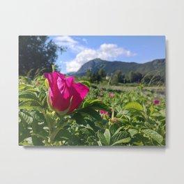 Haines Alaska Wild Rose Metal Print