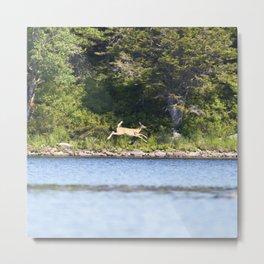Watercolor Deer, Eastern Whitetail 04, Kejimkujic, Nova Scotia, Canada, The Chase Metal Print