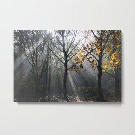 Autumn Sunbeams Metal Print