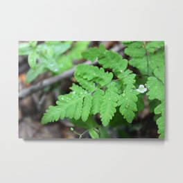 Northern Oak Fern and Raindrops Metal Print