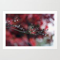 November Rain and Acer Bokeh Art Print