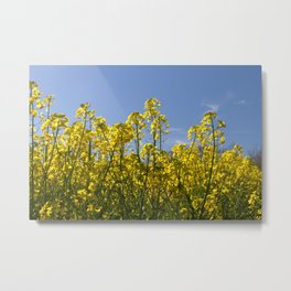 Yellow Flowers, Blue Sky Metal Print