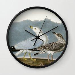 Vintage Seagull Illustration - Audubon Wall Clock
