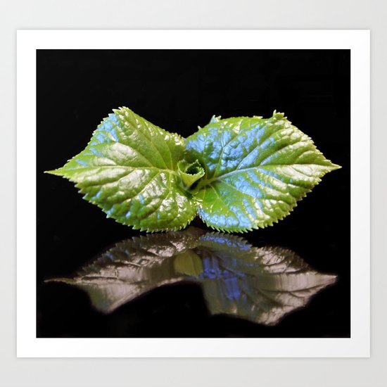 little leaves on black Art Print