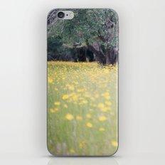 Myakka River State Park iPhone & iPod Skin