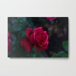 Roses and Raindrops: Magenta Metal Print