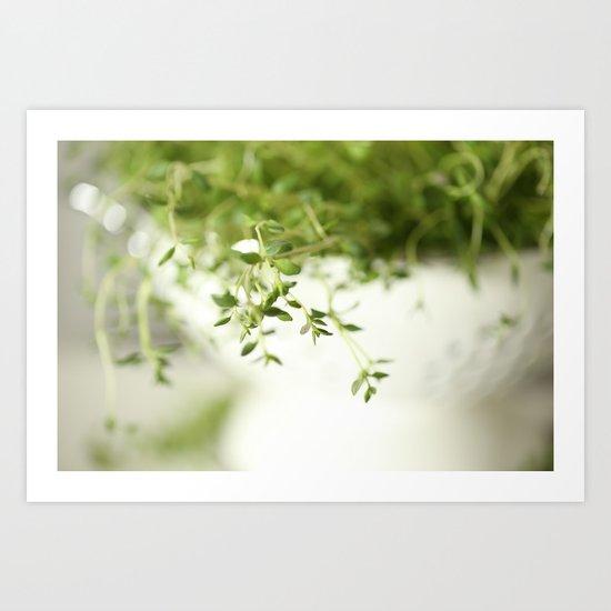 Fresh Herb In A White Pot Art Print