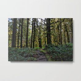 Hoh, Lush Forest Metal Print