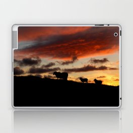 Midnight sun Icelandic sheep Laptop & iPad Skin