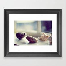 Seashells Framed Art Print
