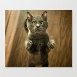 Cat, Cats, Cat Love - Super Cute Cat Canvas Print