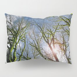 RAIN FOREST MAPLES REACHING FOR THE SKY Pillow Sham