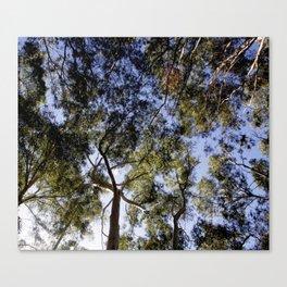 Eucalyptus Tree Canopy Canvas Print