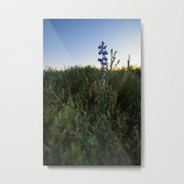 Purple Flowers - Nature Photography Metal Print