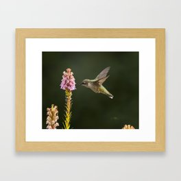 Hummingbird and flower II Framed Art Print