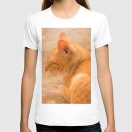 Orange Cat Is Resting On The Terrace  #decor #society6 #homedecor T-shirt