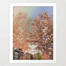 Park Slope Tree Flowers Art Print