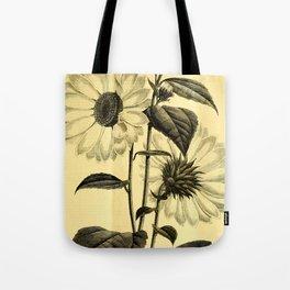 Sunflower Helianthus multiflorus 1891 Tote Bag