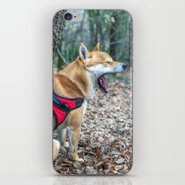 Shiba Inu yelling in the woods iPhone Skin
