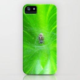 Spider 3149 iPhone Case