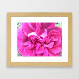 Choco Rose Framed Art Print