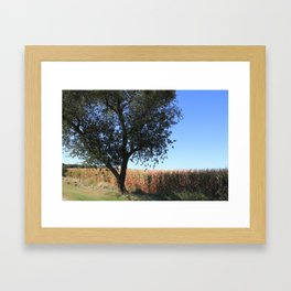 Corn Field in the Midwest Framed Art Print