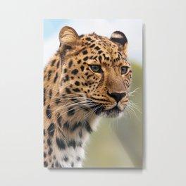 Leopard Head Portrait Metal Print