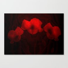 Poppies aglow Canvas Print