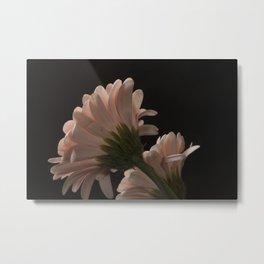 Exotic Pink on Black Gerbera Daisy Petals Metal Print