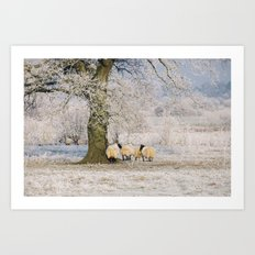 Sheep gathered under a tree covered in a thick hoar frost. Norfolk, UK. Art Print