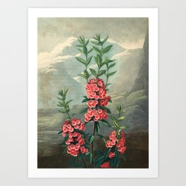 Pink Floral The Narrow-leaved Kalmia : Temple of Flora Art Print