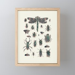 Collection of Insects Framed Mini Art Print